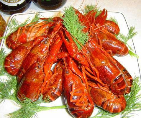 1. Stage. After the crayfish are cooked, let them stand for 10-15 minutes. Boiled crayfish can be served both hot and cold.